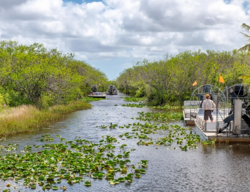 Discover the Everglades on an Airboat Tour